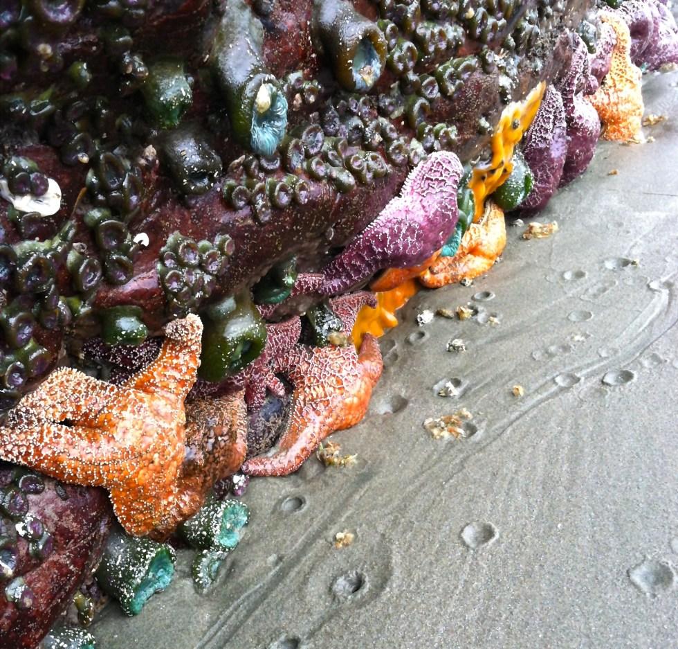 sea star wasting syndrome british columbia