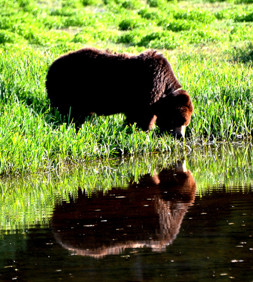 Brown Bear photo credit Pacific Catalyst II
