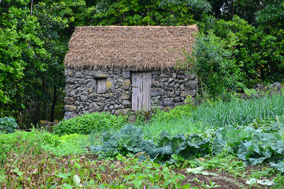 organic garden on Terceira, Azores