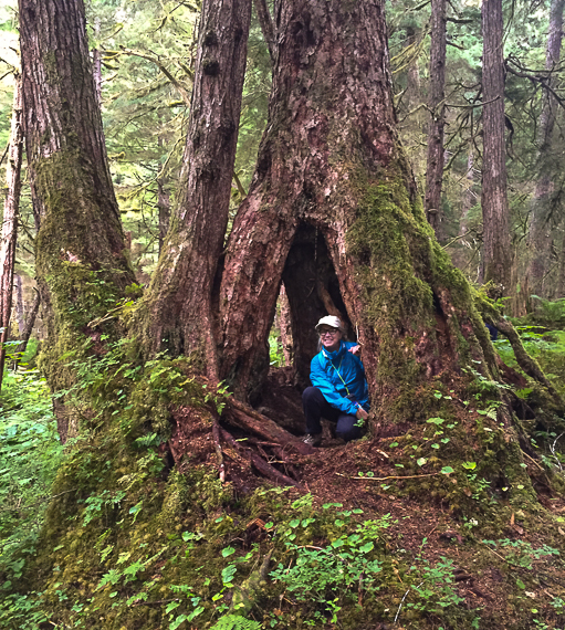 Nutrient dense soil creates a healthy forest