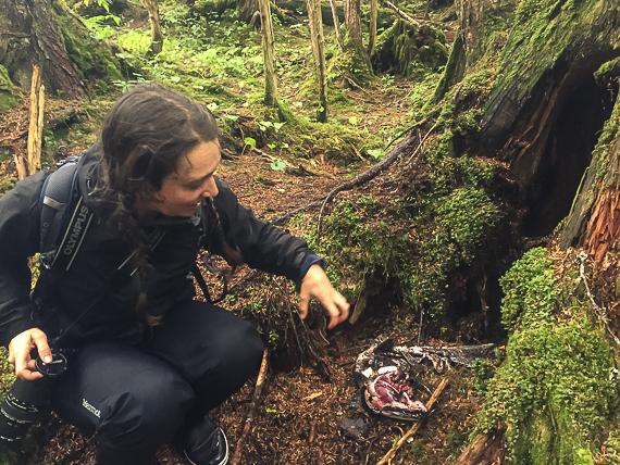 Alaskan salmon culture