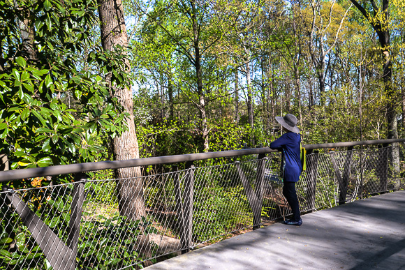 Canopy walk Atlanta Botanical Garden