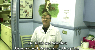Deadly Dog Flu: Get the Facts from Dr. Walden