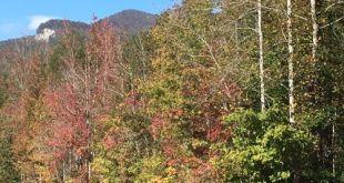 Fall Foliage - Web Cam