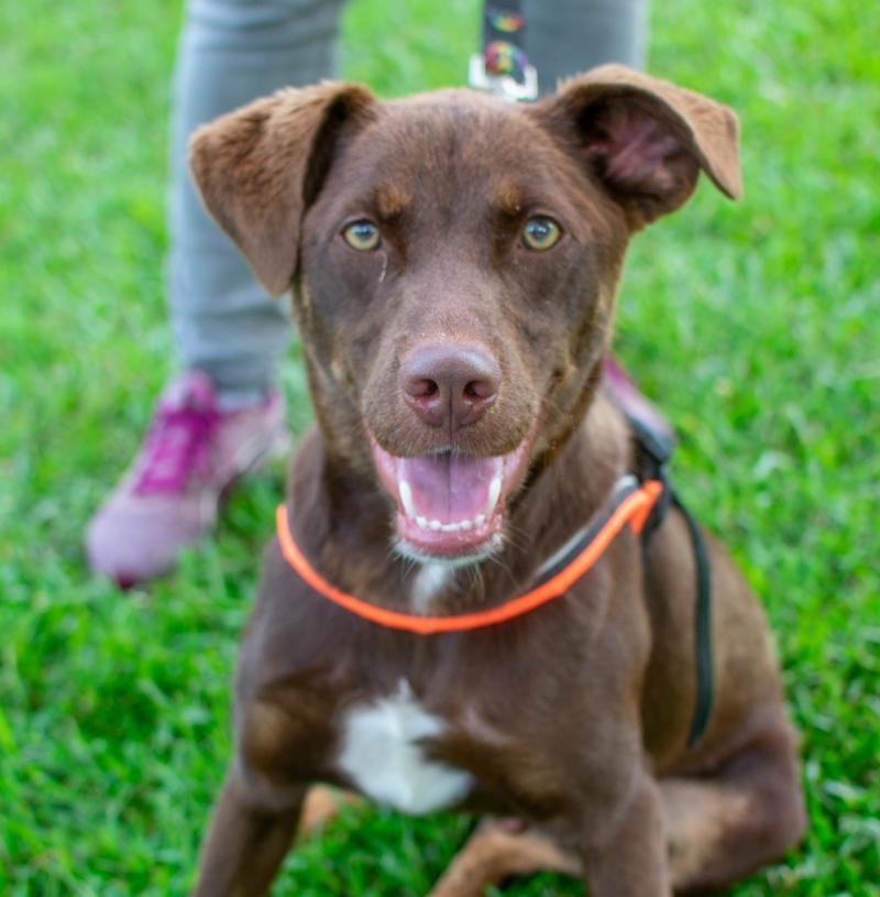 Greenwood Humane Society Adoption Special