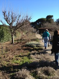 Fruit trees along the perennial border.
