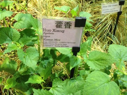 Plant tags in Chinese...