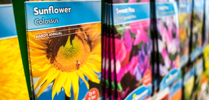 Sunflower and sweet pea seeds