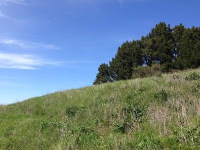 grassy hill, sunny day
