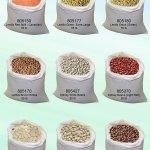 Beans bulk