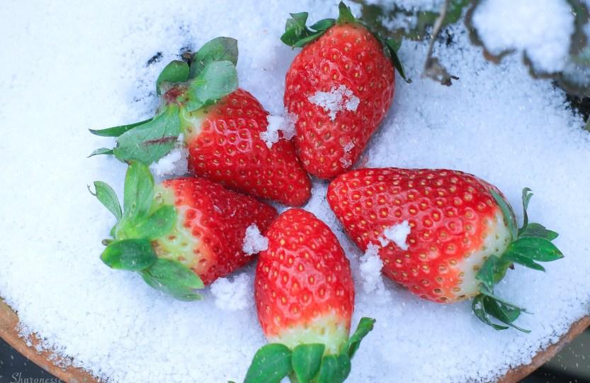 Schneewittchen reloaded - Erdbeeren im Schnee