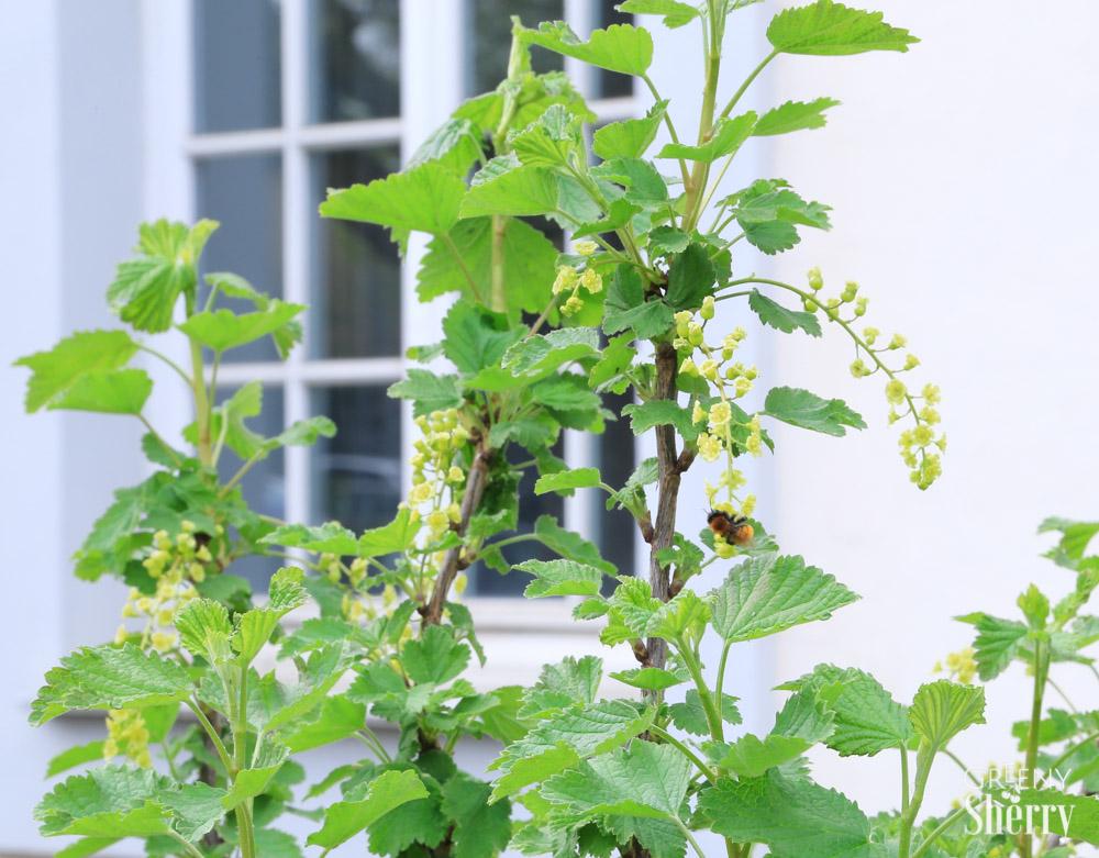 Urban Gardening - Balkon- und Terrassenbegrünung mit Kräutern www.greenysherry.com