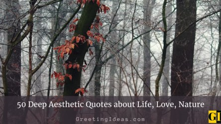 50 Deep Aesthetic Quotes about Life Love Nature