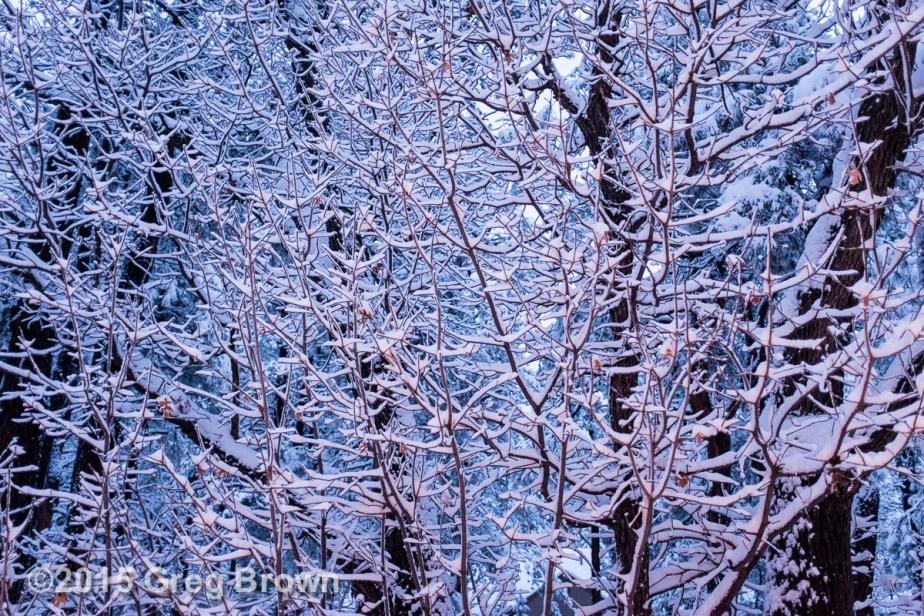 3-15 Snow_0644eSmw1200