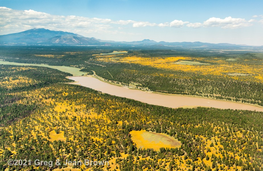 """""""Miles and Miles of Sunflowers!"""" Greg's latest Fine Art Aerial Photo Metal Print!"""