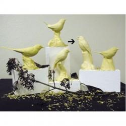 STUDY CASTS Japanese Songbird