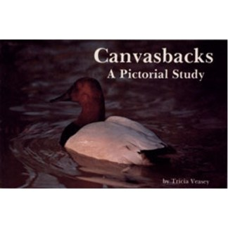Canvasbacks: A Pictorial Study