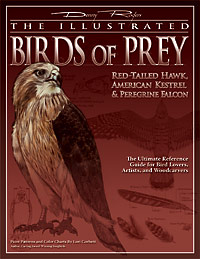 Illustrated Birds of Prey - Red-Tailed Hawk, American Kestrel & Peregrine Falcon