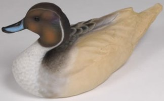Pintail drake head up - Tupelo Roughout
