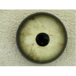 ON WIRE EYES - EAGLE BALD Competition Grade Cream blended 18 mm