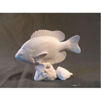"Bluegill Fish by Josh Guge, Study Cast6 1/2"" long X 5"" high"