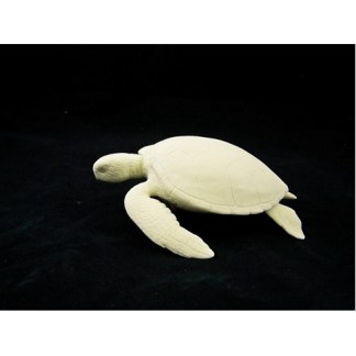 Green Sea Turtle by Josh Guge, Study Cast