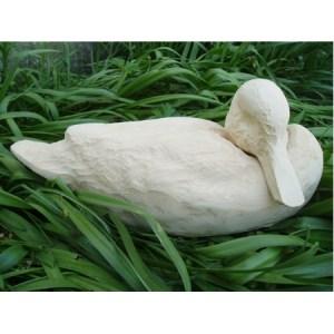 Black duck head down - Tupelo Roughout