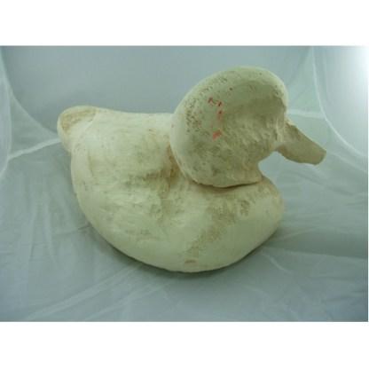 Ruddy duck hen head up - Tupelo Roughout
