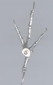 Cast Feet- Meadowlark