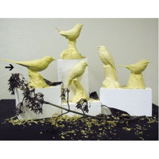 WHITE WAGTAIL Study Cast