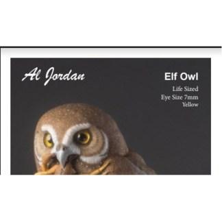 Elf Owl Color Card Al Jordan