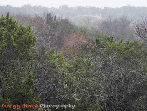 20130109_Rain_in_Austin_005