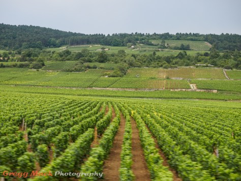 Bus ride through the Burgundy wine region.