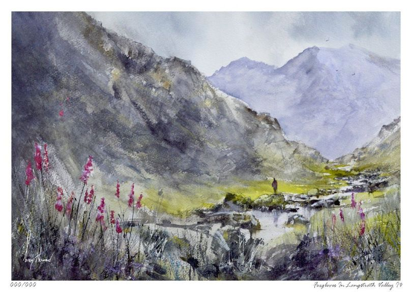Limited Edition Print Foxgloves In Langstrath Valley IV