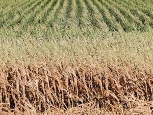 ClimateChangeAndAgriculture