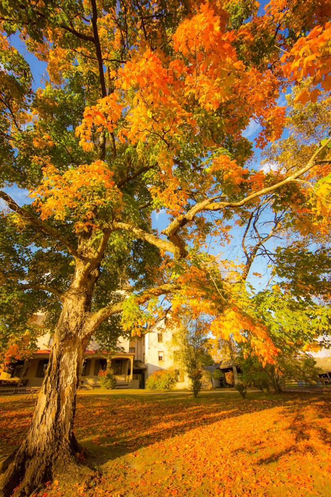 Fall Foliage The Best of Batsto Village in Autumn  Greg