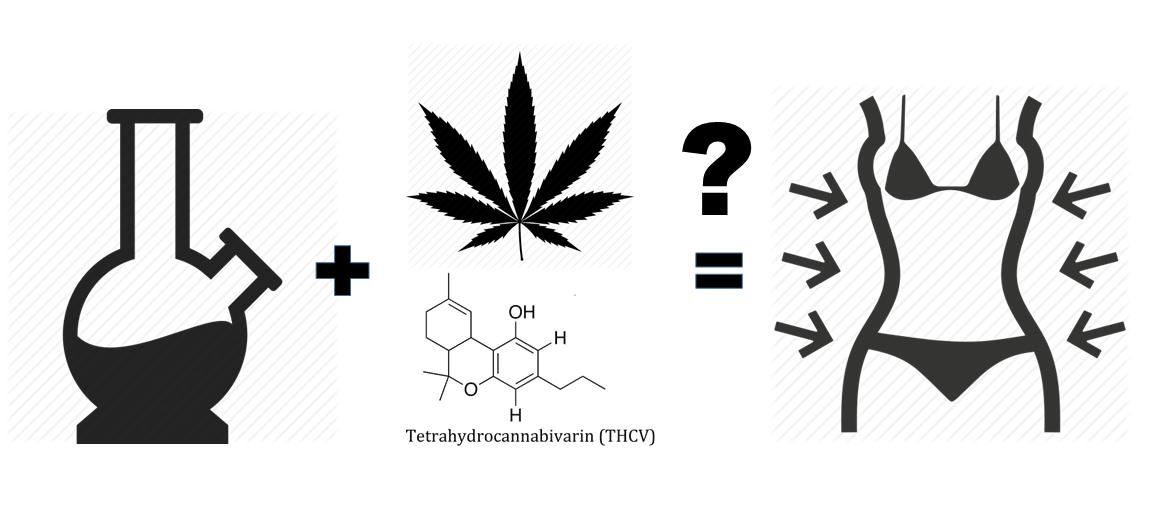 THCV – The skinny cannabinoid (part 1)