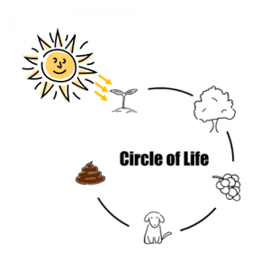 Converting sunlight into poo