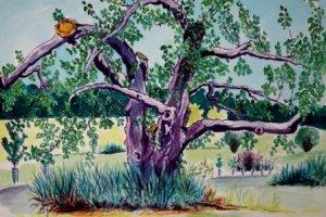 Elder Lady water color painting