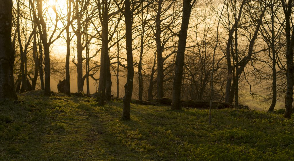 Sunset at Chanctonbury Ring - South Downs National Park
