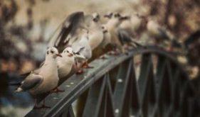 Effective bird deterrents, Bird control methods, Bird deterrent products