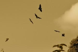 The Wildlife Society Bulletin reports wind turbines kill 888,000 bats annually