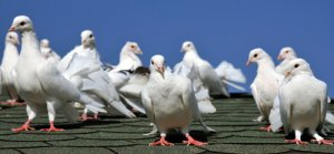 bird-deterrents-work