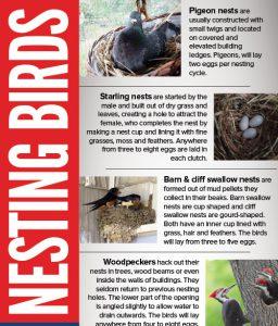 bird nesting infographic