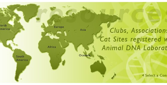 maps_world