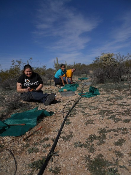 University of Arizona undergraduates helping out with field research