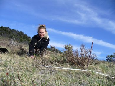 Monitoring plant populations on the eastern front of the Rocky Mountains