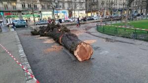 """des arbres qu'Eric Piolle juge """" fragilisés et"""