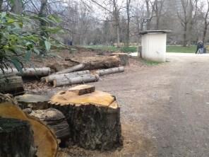 1er géant abattu parc Paul Mistral