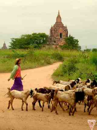 Daily life in Bagan
